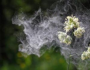 plante-allergie-jardin