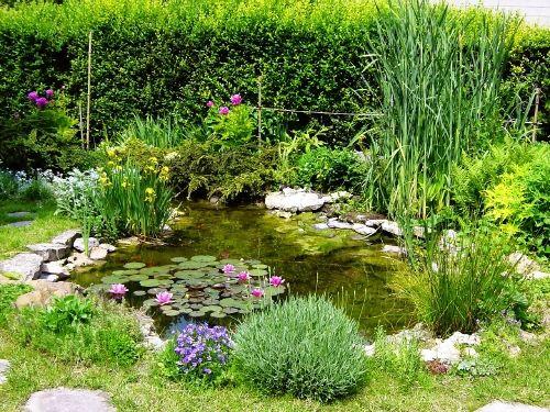 Exemple d'aménagement de jardin aquatique dans un bassin