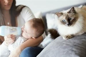 bebe et chat allergie